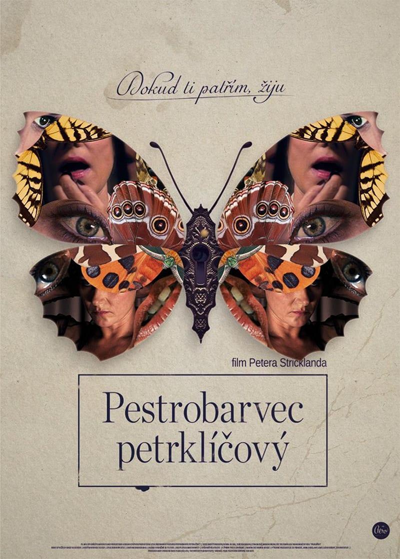 pestrobarvec_petrklicovy_plakat